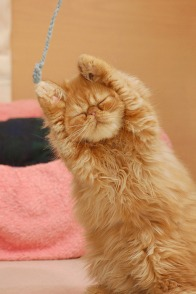 String Cat